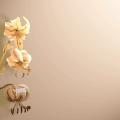Screen Rosa antico | Decorando studio