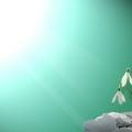 Screen Verde mare | Decorando studio