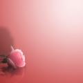 Screen Rosa| Decorando studio